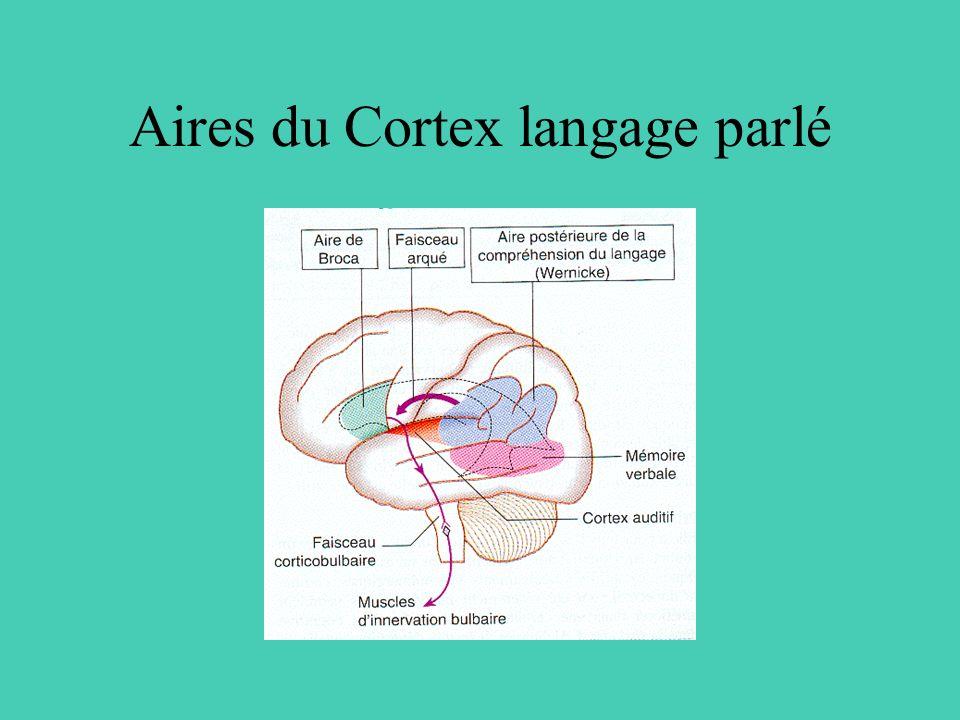 Aires du Cortex langage parlé