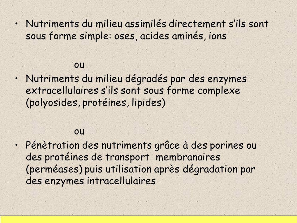 Nutriments du milieu assimilés directement sils sont sous forme simple: oses, acides aminés, ions ou Nutriments du milieu dégradés par des enzymes ext