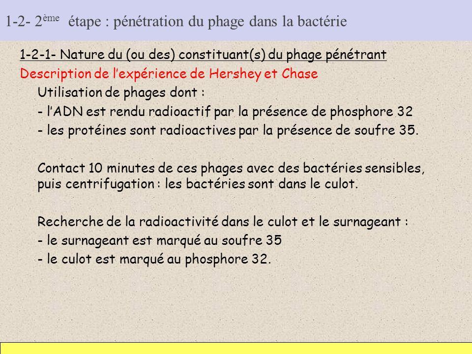 1-2- 2 ème étape : pénétration du phage dans la bactérie 1-2-1- Nature du (ou des) constituant(s) du phage pénétrant Description de lexpérience de Her