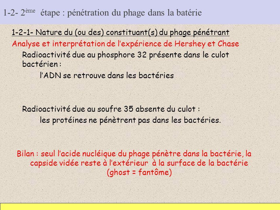 1-2- 2 ème étape : pénétration du phage dans la batérie 1-2-1- Nature du (ou des) constituant(s) du phage pénétrant Analyse et interprétation de lexpé