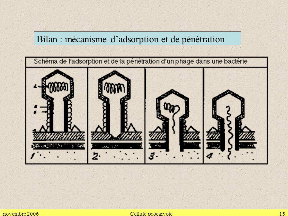 novembre 2006Cellule procaryote15 Bilan : mécanisme dadsorption et de pénétration
