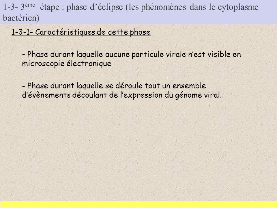 1-3- 3 ème étape : phase déclipse (les phénomènes dans le cytoplasme bactérien) 1-3-1- Caractéristiques de cette phase - Phase durant laquelle aucune