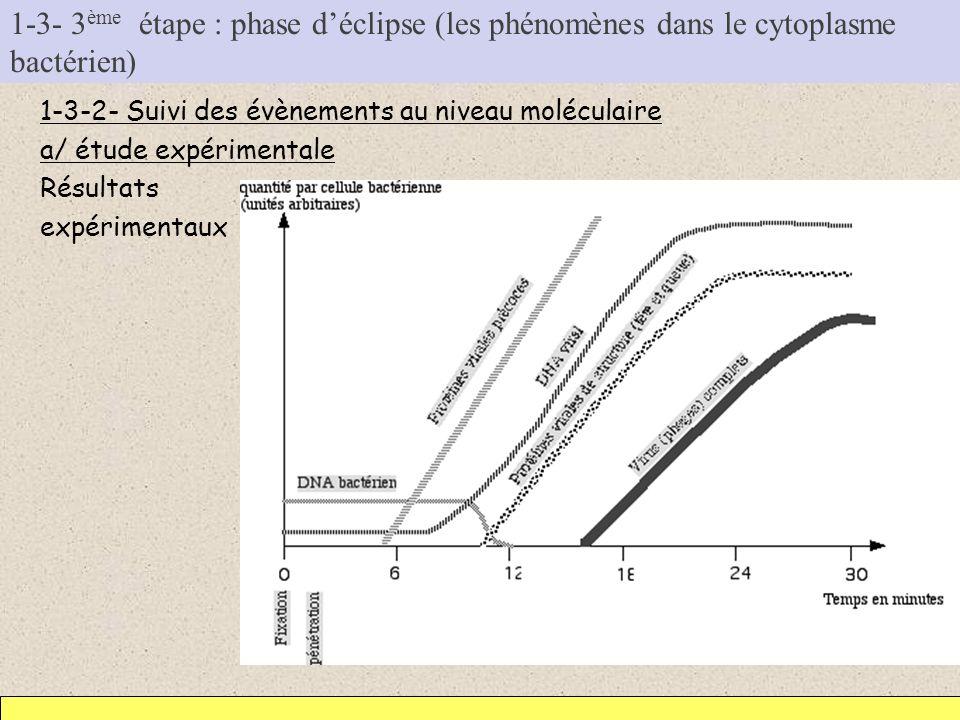 1-3- 3 ème étape : phase déclipse (les phénomènes dans le cytoplasme bactérien) 1-3-2- Suivi des évènements au niveau moléculaire a/ étude expérimenta