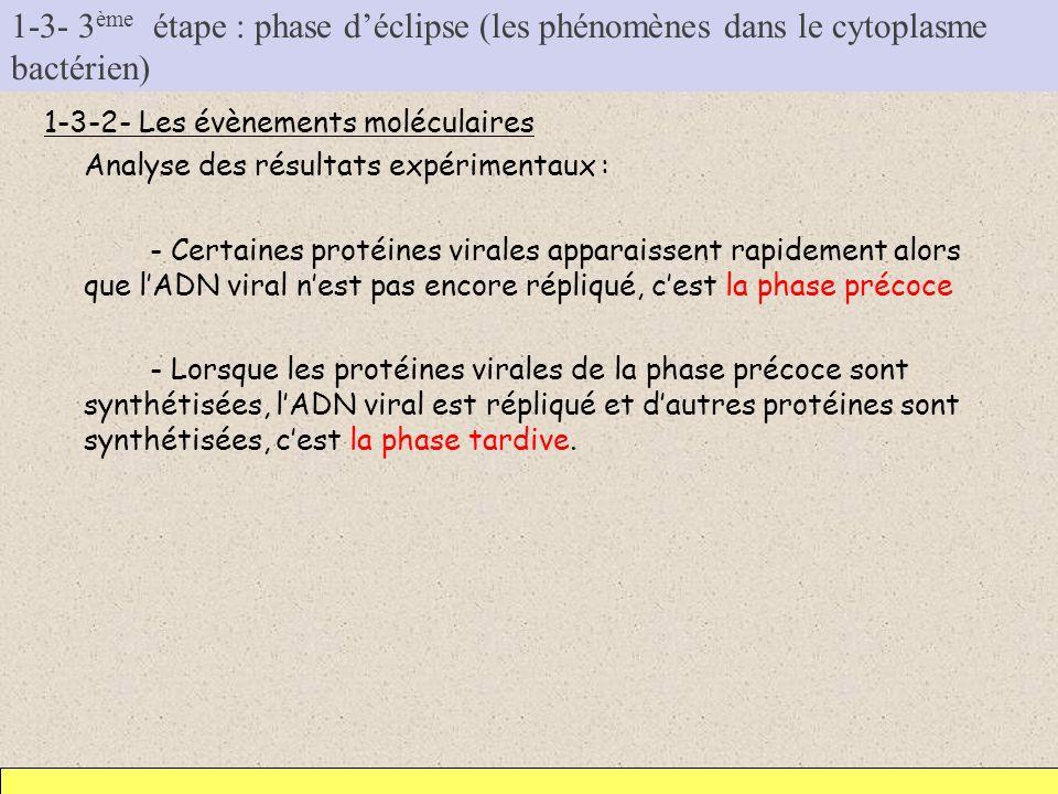 1-3- 3 ème étape : phase déclipse (les phénomènes dans le cytoplasme bactérien) 1-3-2- Les évènements moléculaires Analyse des résultats expérimentaux