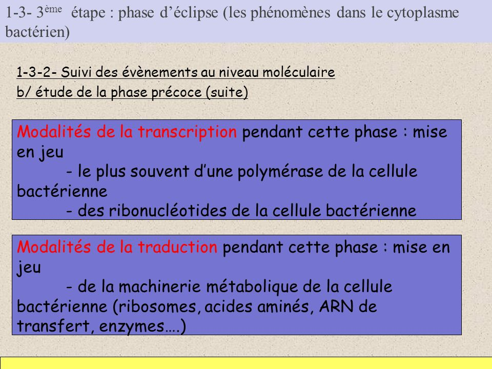 1-3- 3 ème étape : phase déclipse (les phénomènes dans le cytoplasme bactérien) 1-3-2- Suivi des évènements au niveau moléculaire b/ étude de la phase