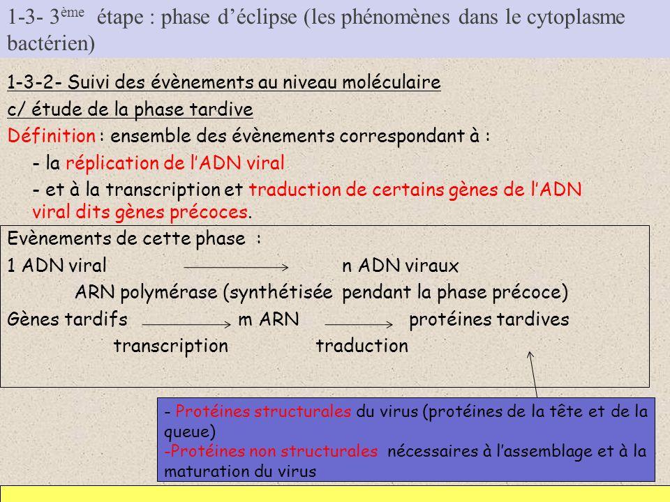 1-3- 3 ème étape : phase déclipse (les phénomènes dans le cytoplasme bactérien) 1-3-2- Suivi des évènements au niveau moléculaire c/ étude de la phase
