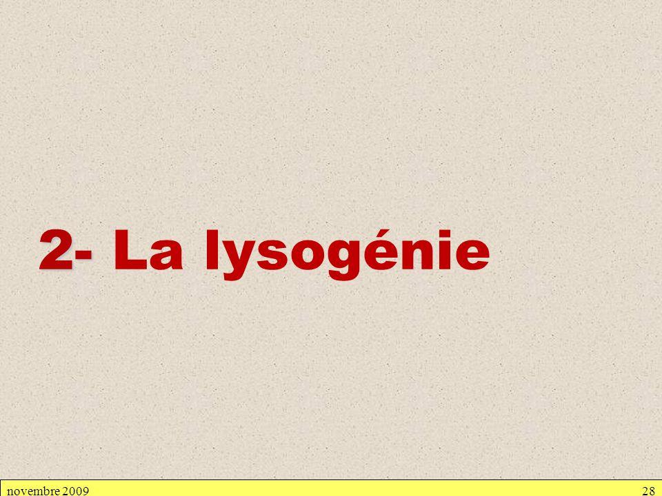novembre 200928 2- 2- La lysogénie