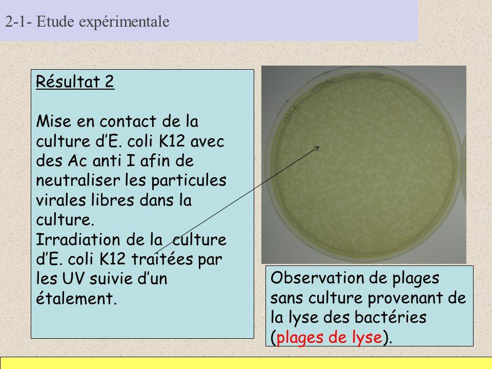 2-1- Etude expérimentale Résultat 2 Mise en contact de la culture dE. coli K12 avec des Ac anti I afin de neutraliser les particules virales libres da