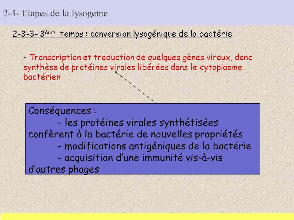 2-3- Etapes de la lysogénie 2-3-3- 3 ème temps : conversion lysogénique de la bactérie - Transcription et traduction de quelques gènes viraux, donc sy