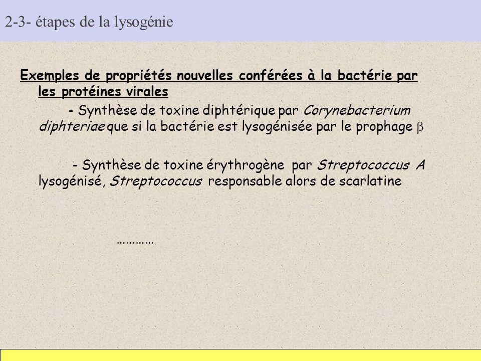 2-3- étapes de la lysogénie Exemples de propriétés nouvelles conférées à la bactérie par les protéines virales - Synthèse de toxine diphtérique par Co