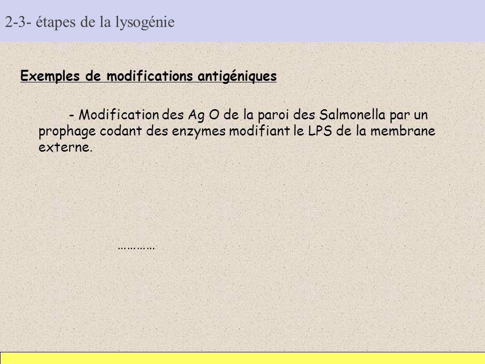 2-3- étapes de la lysogénie Exemples de modifications antigéniques - Modification des Ag O de la paroi des Salmonella par un prophage codant des enzym