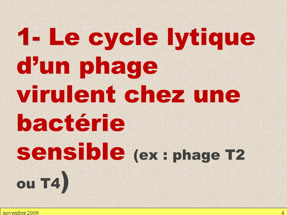 novembre 20094 1- 1- Le cycle lytique dun phage virulent chez une bactérie sensible (ex : phage T2 ou T4 )