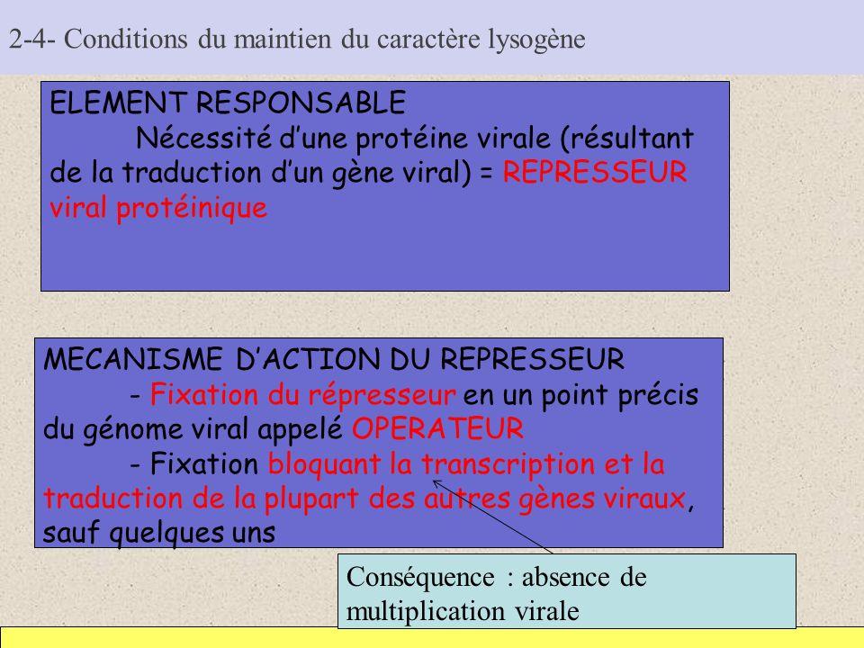 2-4- Conditions du maintien du caractère lysogène ELEMENT RESPONSABLE Nécessité dune protéine virale (résultant de la traduction dun gène viral) = REP