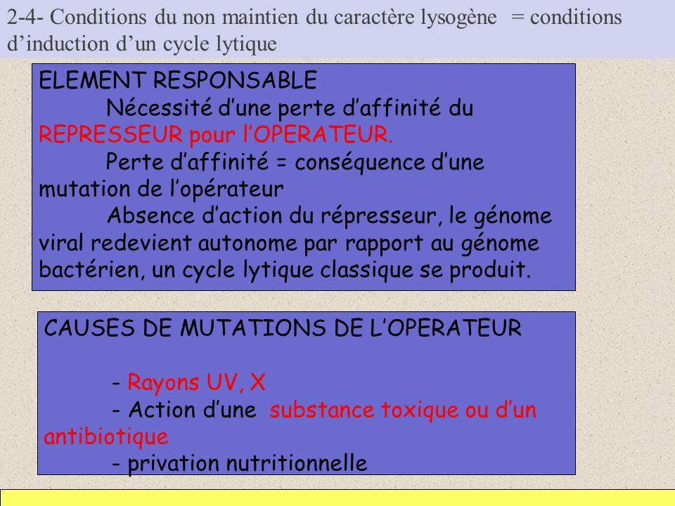 2-4- Conditions du non maintien du caractère lysogène = conditions dinduction dun cycle lytique ELEMENT RESPONSABLE Nécessité dune perte daffinité du