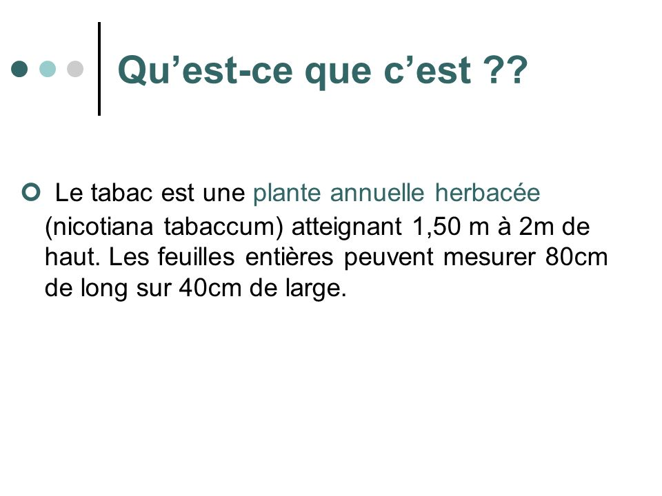 Quest-ce que cest ?? Le tabac est une plante annuelle herbacée (nicotiana tabaccum) atteignant 1,50 m à 2m de haut. Les feuilles entières peuvent mesu