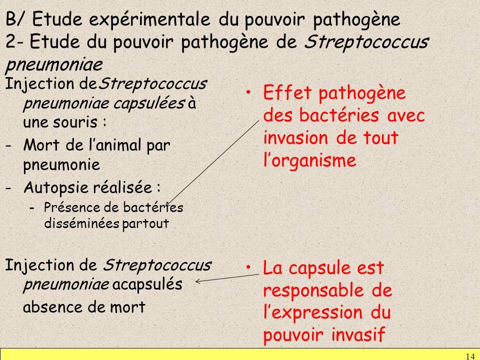 B/ Etude expérimentale du pouvoir pathogène 2- Etude du pouvoir pathogène de Streptococcus pneumoniae Injection deStreptococcus pneumoniae capsulées à