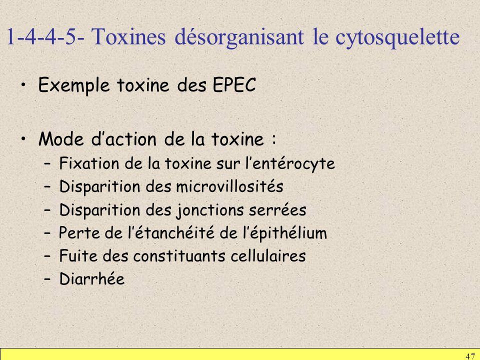 1-4-4-5- Toxines désorganisant le cytosquelette 47 Exemple toxine des EPEC Mode daction de la toxine : –Fixation de la toxine sur lentérocyte –Dispari