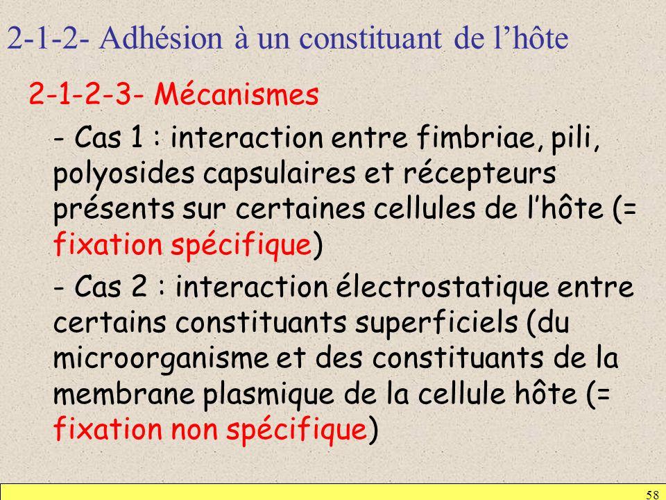 2-1-2- Adhésion à un constituant de lhôte 58 2-1-2-3- Mécanismes - Cas 1 : interaction entre fimbriae, pili, polyosides capsulaires et récepteurs prés
