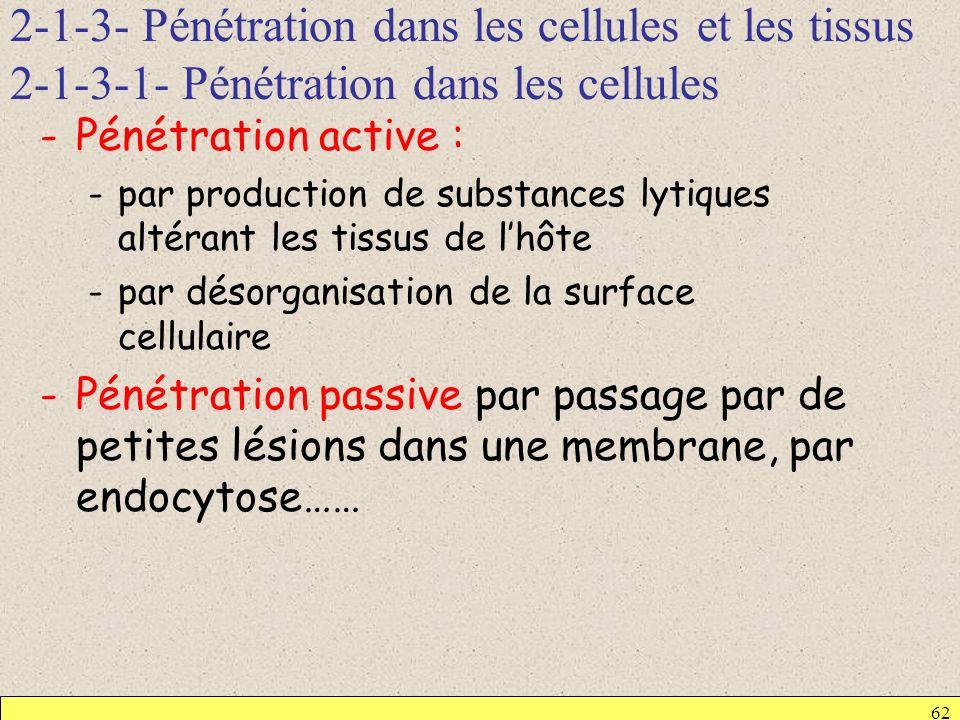 2-1-3- Pénétration dans les cellules et les tissus 2-1-3-1- Pénétration dans les cellules 62 -Pénétration active : -par production de substances lytiq
