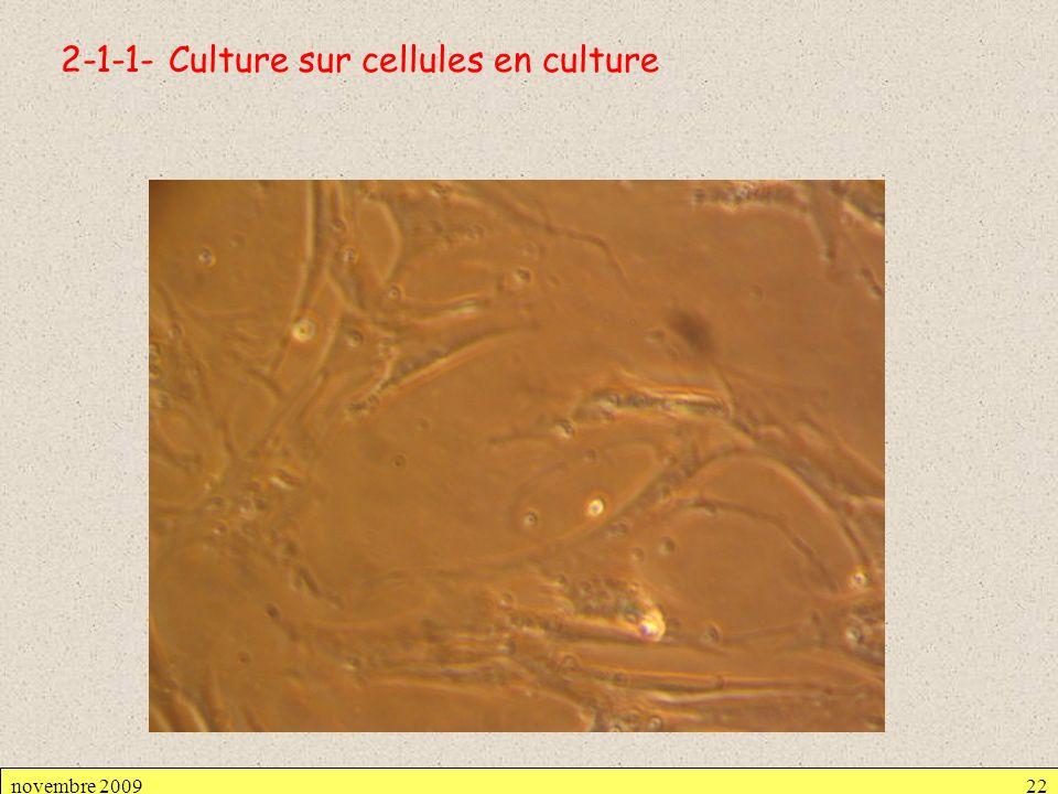 2-1-1- Culture sur cellules en culture novembre 200922
