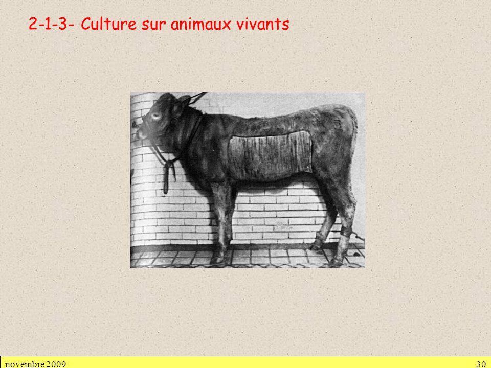 2-1-3- Culture sur animaux vivants novembre 200930