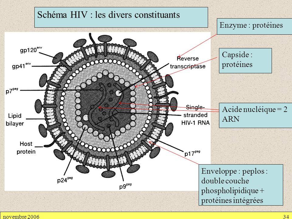 novembre 200634 Capside : protéines Schéma HIV : les divers constituants Acide nucléique = 2 ARN Enveloppe : peplos : double couche phospholipidique +