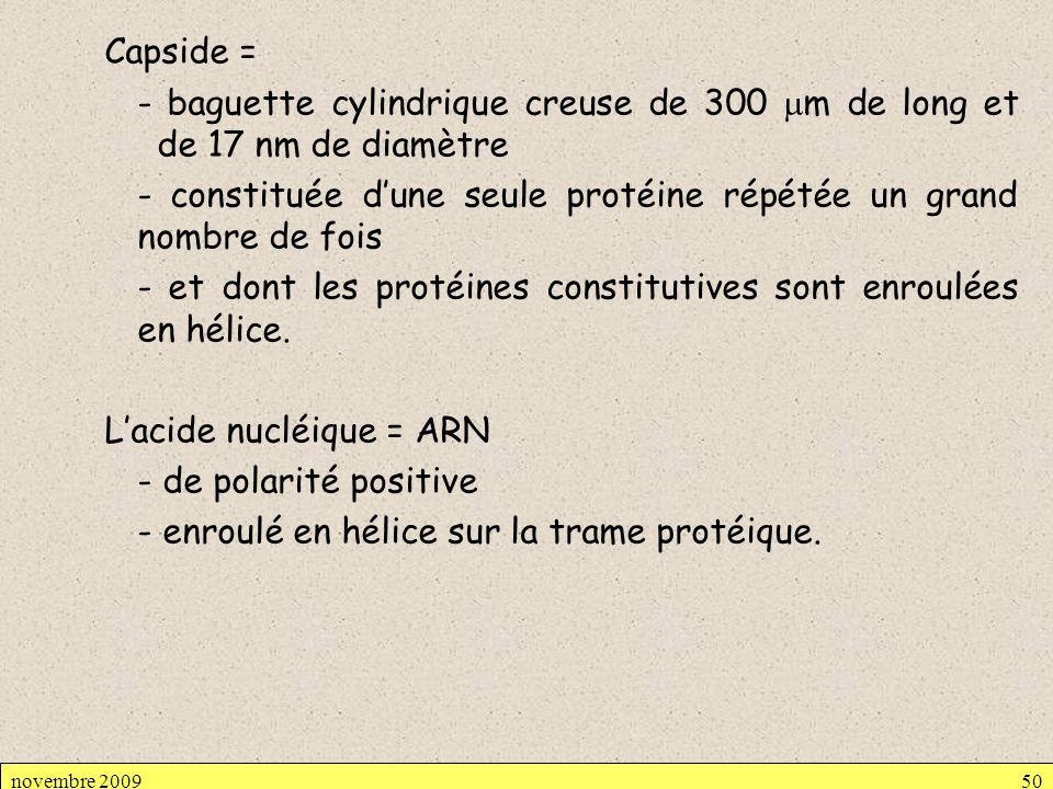 Capside = - baguette cylindrique creuse de 300 m de long et de 17 nm de diamètre - constituée dune seule protéine répétée un grand nombre de fois - et