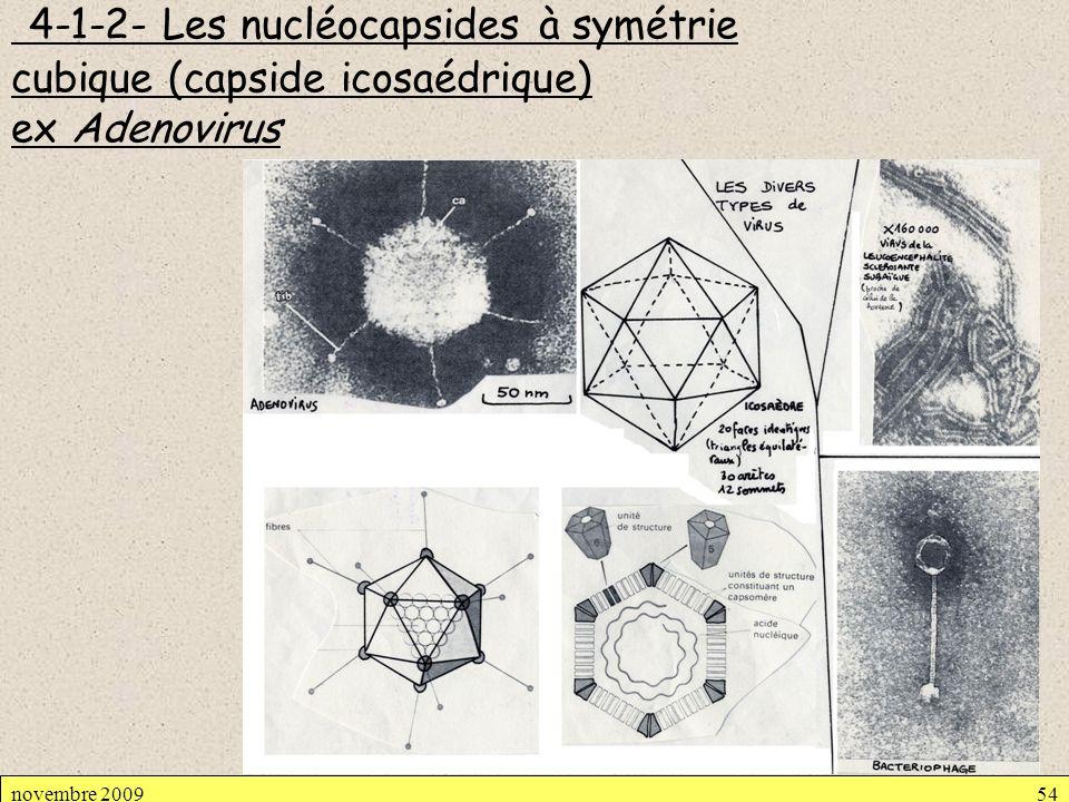 4-1-2- Les nucléocapsides à symétrie cubique (capside icosaédrique) ex Adenovirus novembre 200954