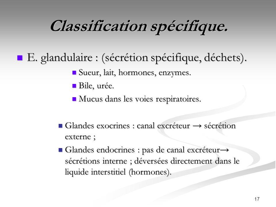 17 Classification spécifique. E. glandulaire : (sécrétion spécifique, déchets). E. glandulaire : (sécrétion spécifique, déchets). Sueur, lait, hormone