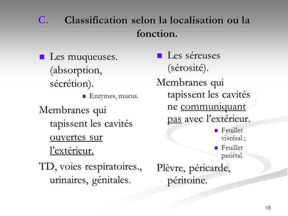 18 C.Classification selon la localisation ou la fonction. Les muqueuses. (absorption, sécrétion). Les muqueuses. (absorption, sécrétion). Enzymes, muc