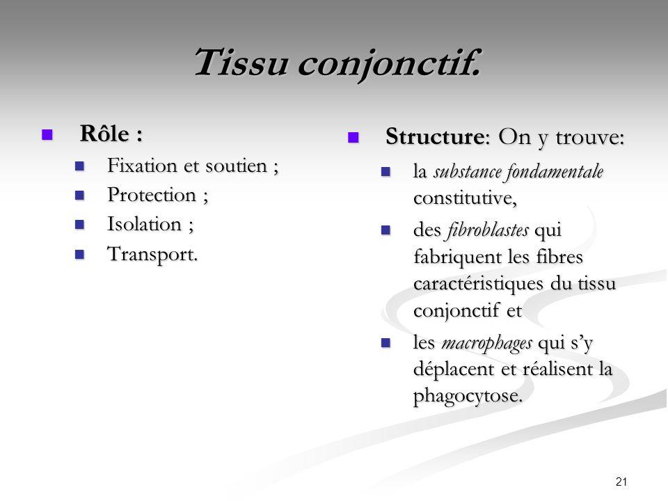 21 Tissu conjonctif. Rôle : Rôle : Fixation et soutien ; Fixation et soutien ; Protection ; Protection ; Isolation ; Isolation ; Transport. Transport.