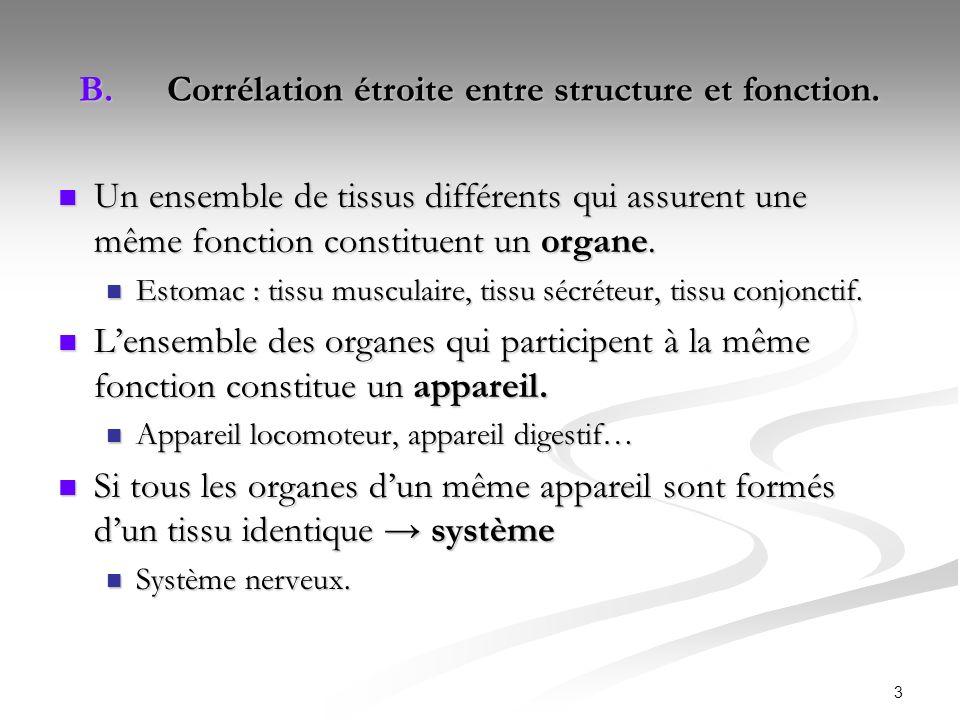 3 B.Corrélation étroite entre structure et fonction. Un ensemble de tissus différents qui assurent une même fonction constituent un organe. Un ensembl