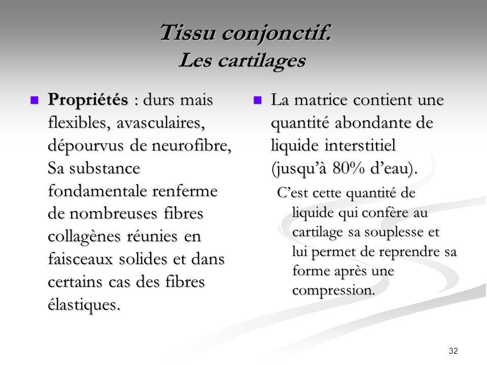 32 Tissu conjonctif. Les cartilages Tissu conjonctif. Les cartilages Propriétés : durs mais flexibles, avasculaires, dépourvus de neurofibre, Sa subst