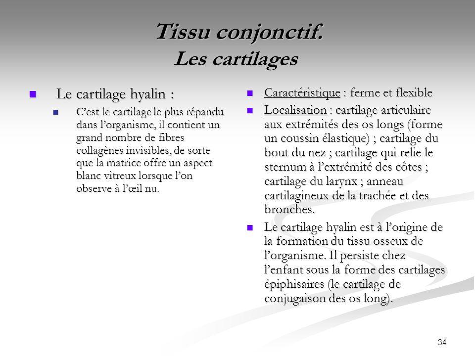 34 Tissu conjonctif. Les cartilages Tissu conjonctif. Les cartilages Le cartilage hyalin : Le cartilage hyalin : Cest le cartilage le plus répandu dan