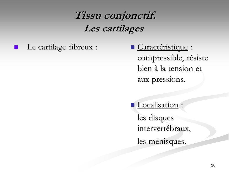 36 Tissu conjonctif. Les cartilages Tissu conjonctif. Les cartilages Le cartilage fibreux : Le cartilage fibreux : Caractéristique : compressible, rés