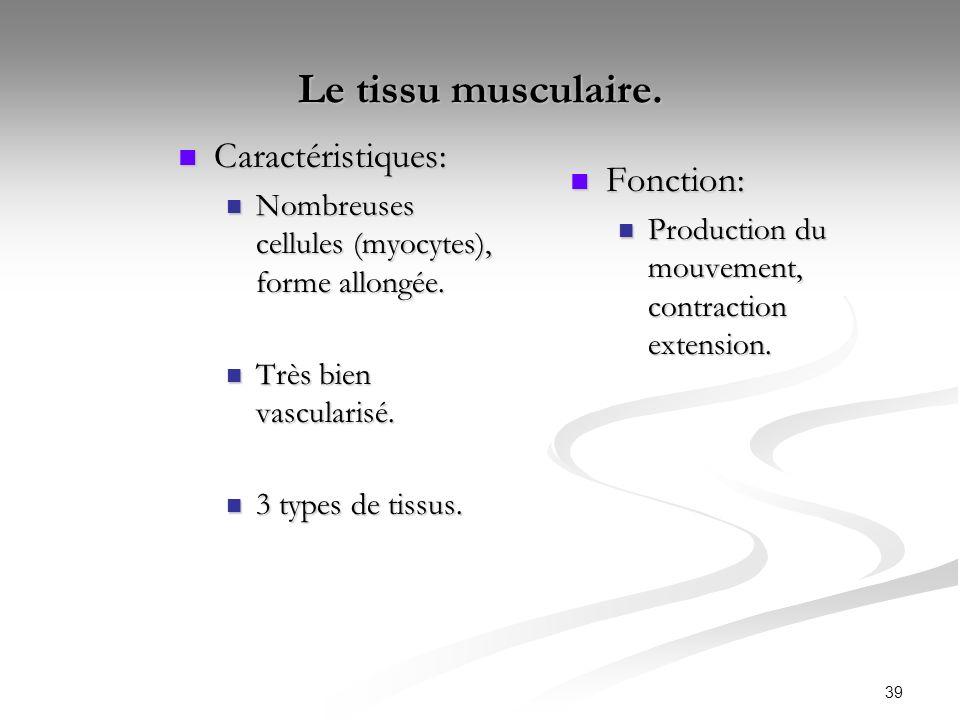 39 Le tissu musculaire. Caractéristiques: Caractéristiques: Nombreuses cellules (myocytes), forme allongée. Nombreuses cellules (myocytes), forme allo