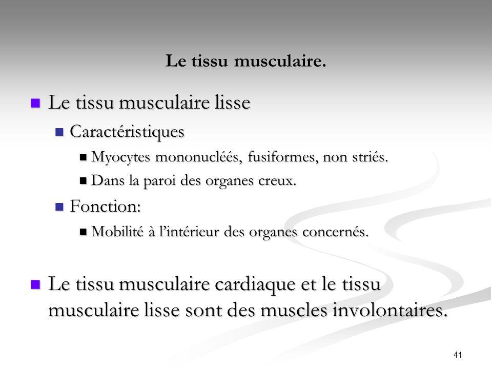 41 Le tissu musculaire. Le tissu musculaire lisse Le tissu musculaire lisse Caractéristiques Caractéristiques Myocytes mononucléés, fusiformes, non st