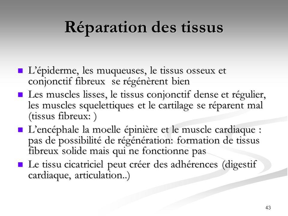 43 Réparation des tissus Lépiderme, les muqueuses, le tissus osseux et conjonctif fibreux se régénèrent bien Lépiderme, les muqueuses, le tissus osseu