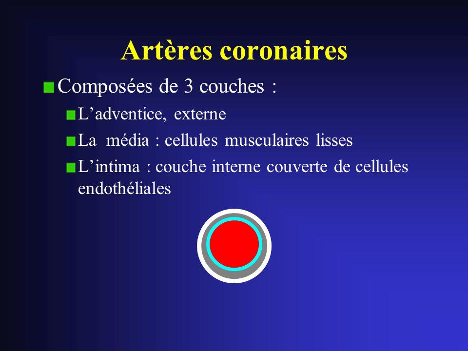 Artères coronaires Composées de 3 couches : Ladventice, externe La média : cellules musculaires lisses Lintima : couche interne couverte de cellules e
