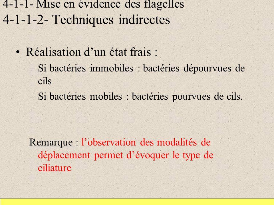 4-1-1- Mise en évidence des flagelles 4-1-1-2- Techniques indirectes Réalisation dun état frais : –Si bactéries immobiles : bactéries dépourvues de cils –Si bactéries mobiles : bactéries pourvues de cils.