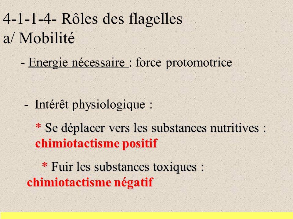 4-1-1-4- Rôles des flagelles a/ Mobilité - Energie nécessaire : force protomotrice - Intérêt physiologique : * Se déplacer vers les substances nutritives : chimiotactisme positif * Fuir les substances toxiques : chimiotactisme négatif -