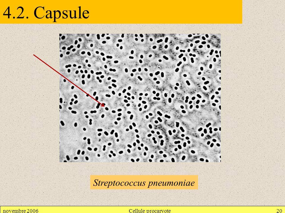 novembre 2006Cellule procaryote20 4.2. Capsule Streptococcus pneumoniae