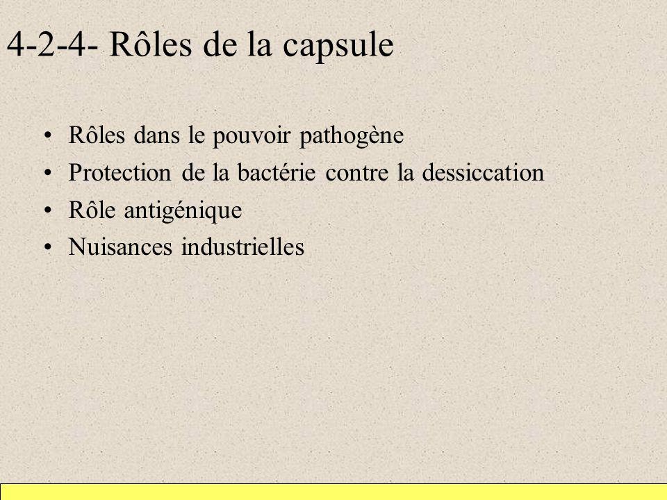 4-2-4- Rôles de la capsule Rôles dans le pouvoir pathogène Protection de la bactérie contre la dessiccation Rôle antigénique Nuisances industrielles