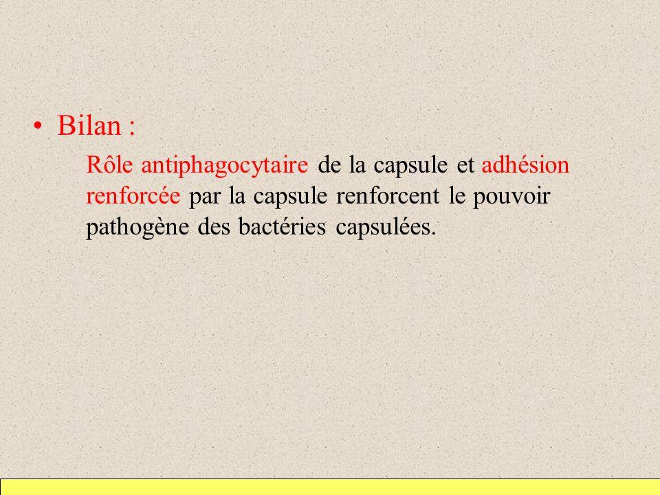 Bilan : Rôle antiphagocytaire de la capsule et adhésion renforcée par la capsule renforcent le pouvoir pathogène des bactéries capsulées.