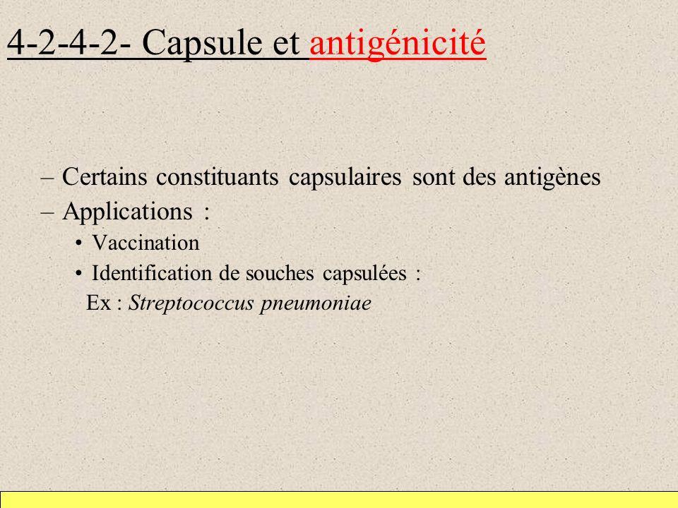 4-2-4-2- Capsule et antigénicité –Certains constituants capsulaires sont des antigènes –Applications : Vaccination Identification de souches capsulées : Ex : Streptococcus pneumoniae