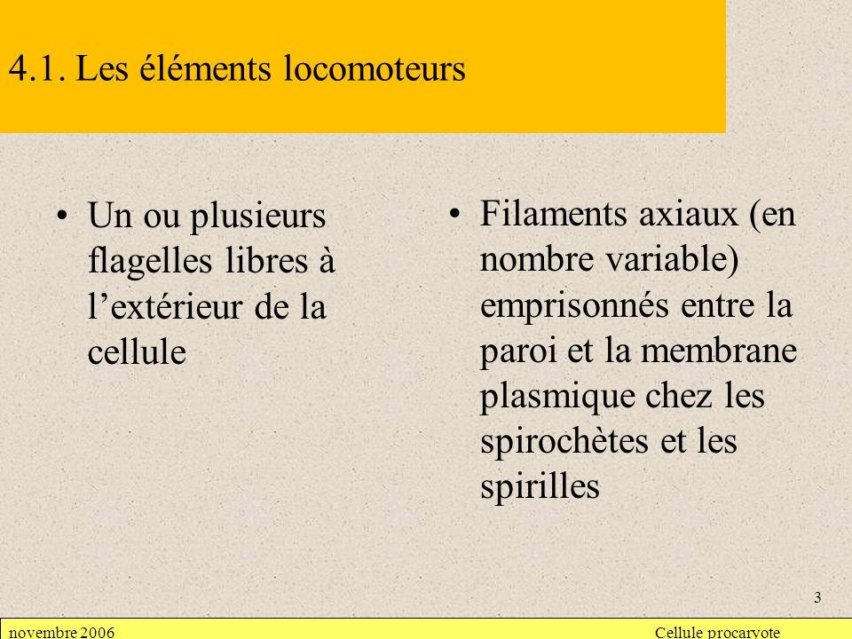 Couche S dune Archaeae MET 100 nm