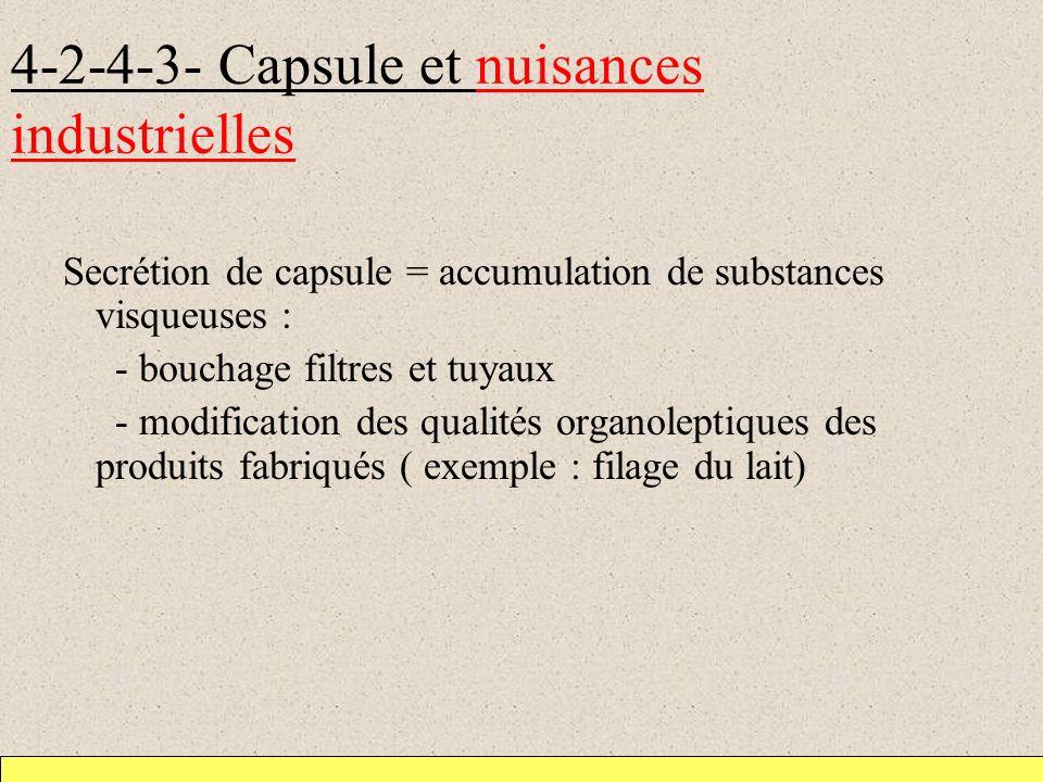 4-2-4-3- Capsule et nuisances industrielles Secrétion de capsule = accumulation de substances visqueuses : - bouchage filtres et tuyaux - modification des qualités organoleptiques des produits fabriqués ( exemple : filage du lait)