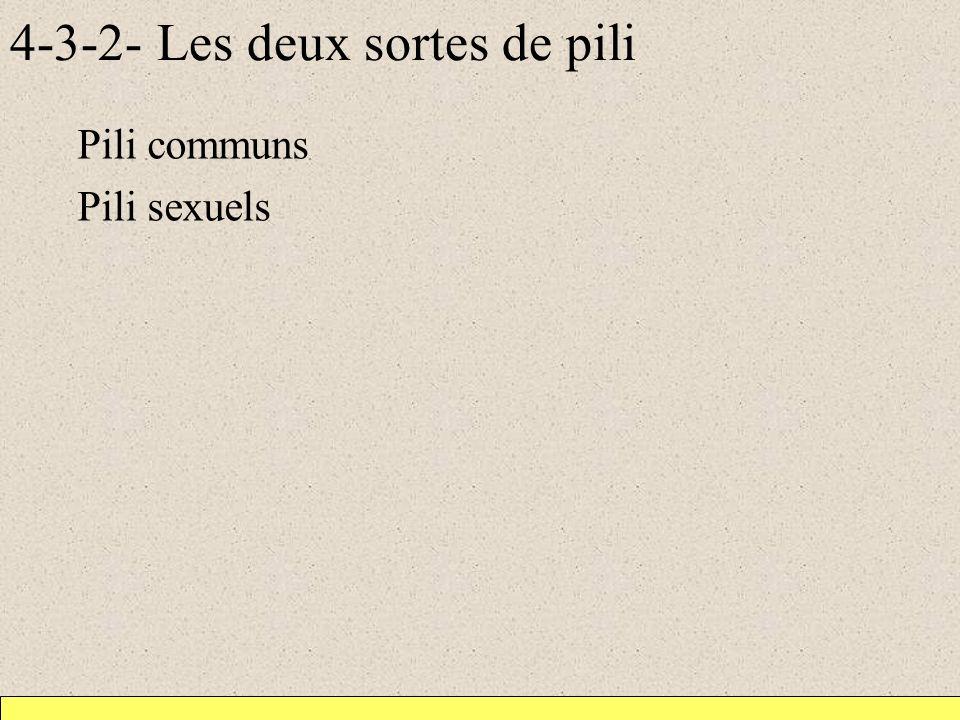 4-3-2- Les deux sortes de pili Pili communs Pili sexuels