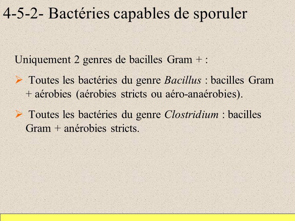 4-5-2- Bactéries capables de sporuler Uniquement 2 genres de bacilles Gram + : Toutes les bactéries du genre Bacillus : bacilles Gram + aérobies (aérobies stricts ou aéro-anaérobies).