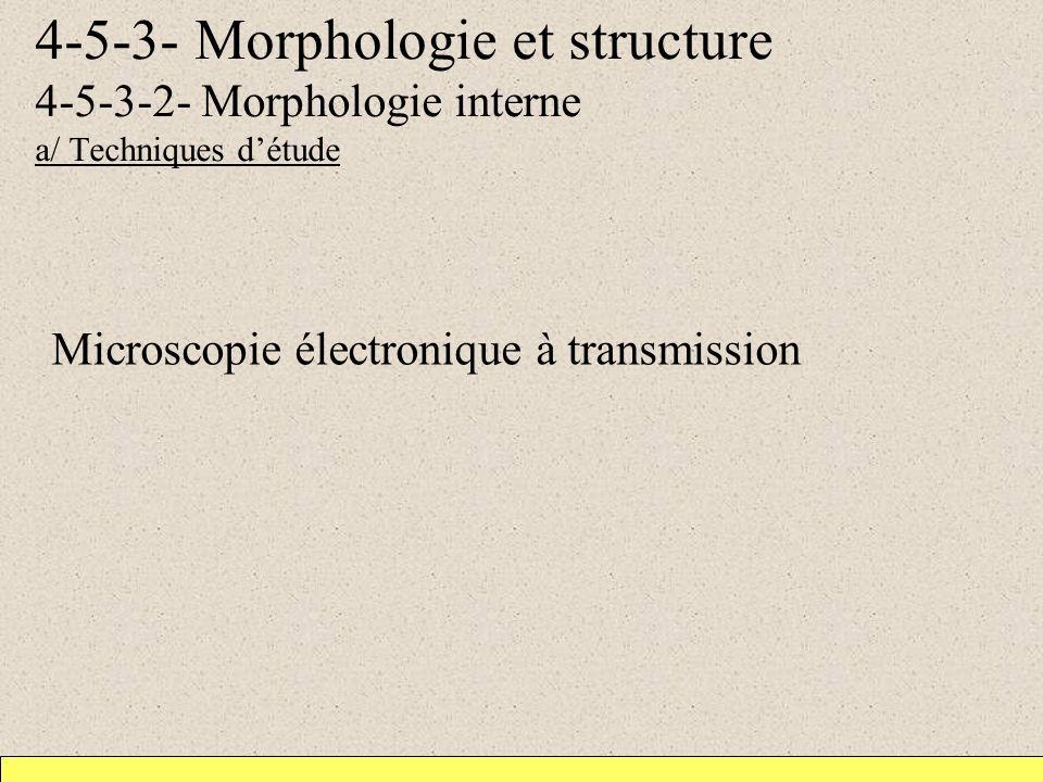4-5-3- Morphologie et structure 4-5-3-2- Morphologie interne a/ Techniques détude Microscopie électronique à transmission